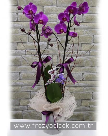 Asil Çift Dallı Seramikli Mor Orkide