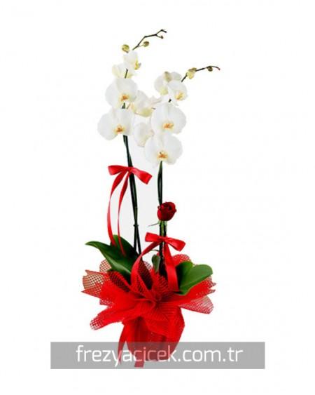 Kırmızı Tüllü Beyaz Orkide