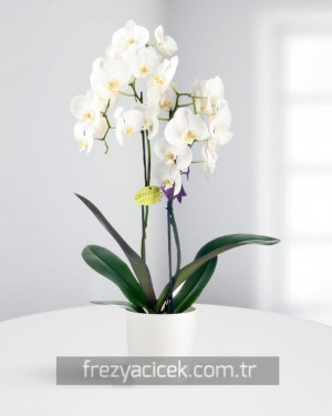 Büyülü Beyaz